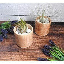 Air Plant In Wooden Hand Turned Bowl